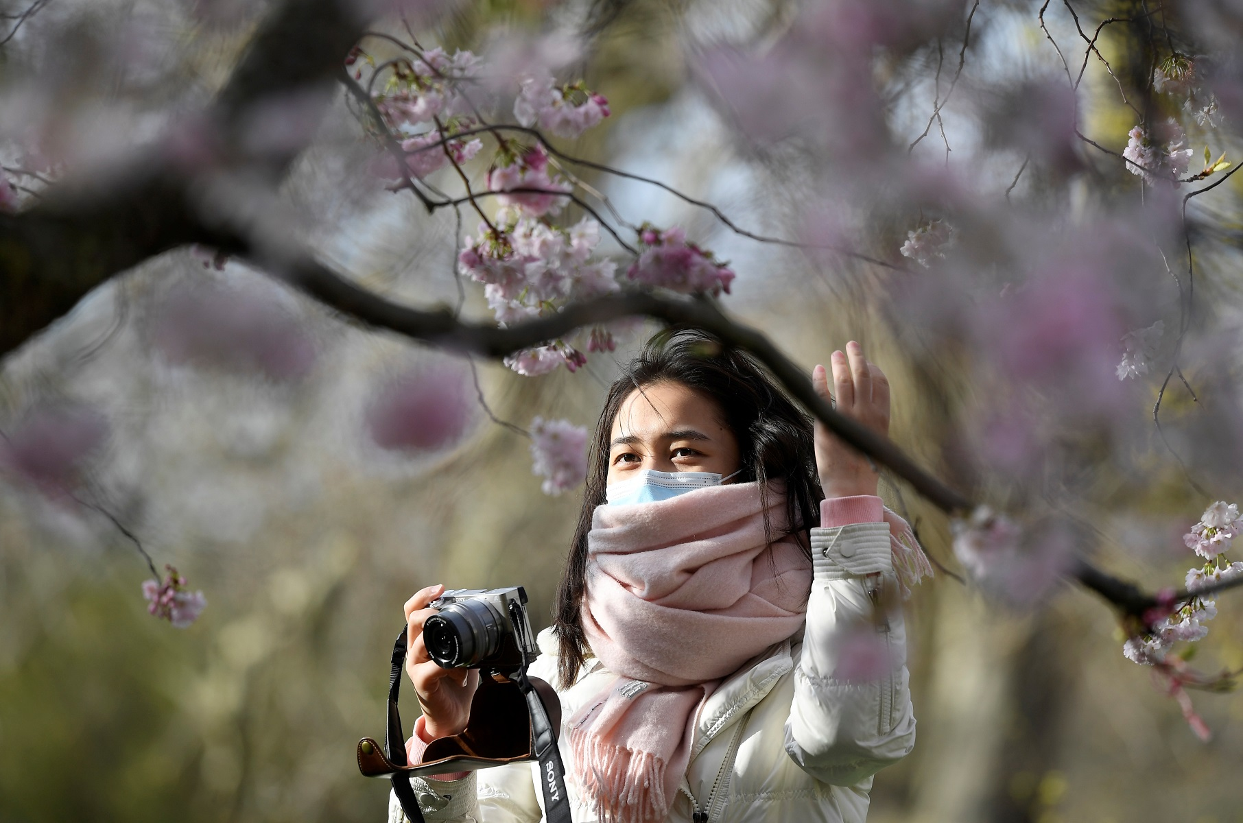 A woman wearing a face protection mask takes photographs of cherry blossom in St James's Park in London, Britain, March 11, 2020. REUTERS/Toby Melville